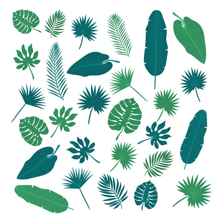 Collection of tropical leaves. Nature elements for your design.