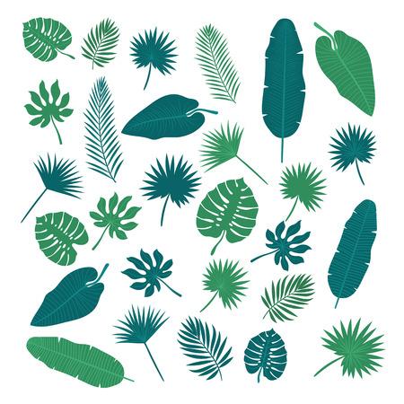 Sammlung von tropischen Blättern. Natur-Elemente für Ihr Design.