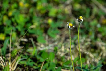 depending: Wild flowers have different colors depending on its type.