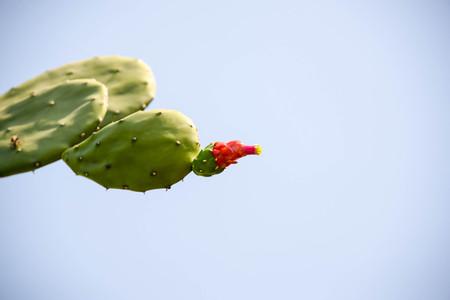 invitando: Cactus que florece temprano difunto rey parecía muy acogedora.