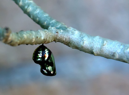 pupa: Some insects will grow into an adult to become a pupa before.