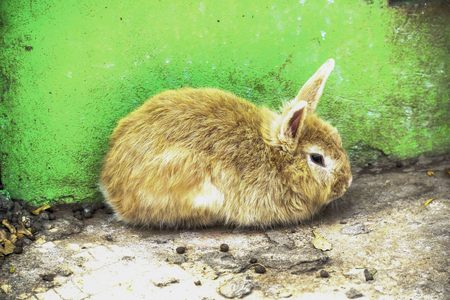 cater: Rabbits were kept in a cage, it can cater to the party and the people who have seen it.