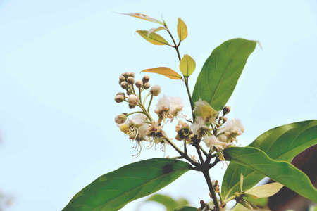 White flowering trees that have beautiful flowers of different species. Stock Photo