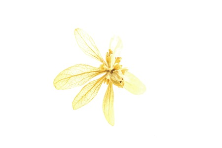 durable: Dried flowers can be made into flowers that are more durable than fresh flowers.