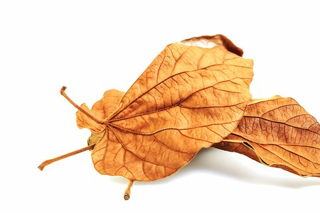 durable: We can make the dry leaves to make artificial flowers are more durable than fresh leaves.
