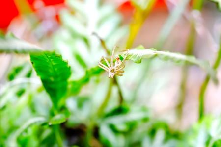 When the spiders head, it will molt. Stock Photo