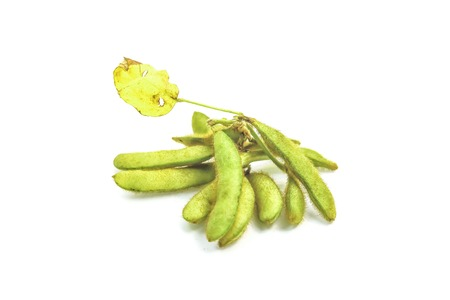 protein crops: Beans are annual crops that provide food protein. Stock Photo