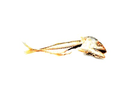 Bone fragments remaining after eating fish.