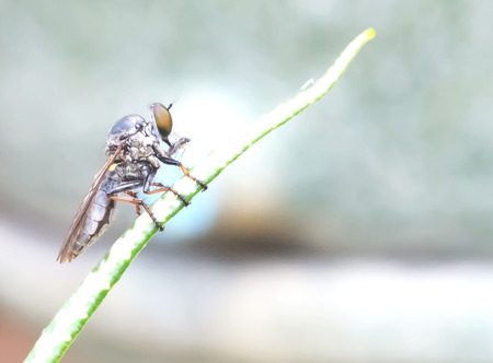 Dragonfly caught in late spring to relax. Stock Photo