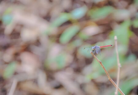 perch: Dragonflies are catching perch on the branches.