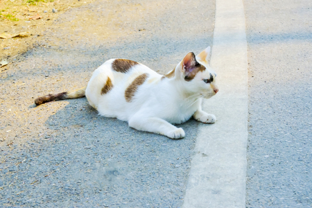 crouched: The cat was crouched beside the road like a lifeguard.
