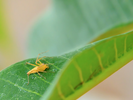 Spiders intercepted their food on a leaf.