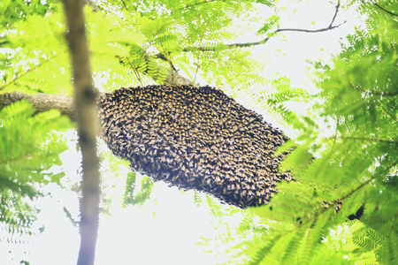 usually: Usually, the bees build their nests high in the trees.