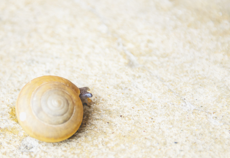 despacio: Caracol que se arrastra en un suelo de cemento lentamente.