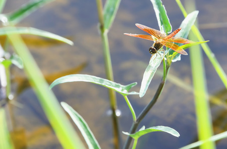 eye close up: Dragonflies never fly perched on a leaf.