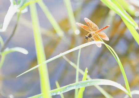 grass close up: Dragonflies never fly perched on a leaf.