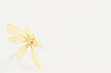 deteriorated: Dried flowers can be made into flowers that are more durable than fresh flowers.