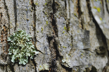 occur: Lichens occur in areas with high humidity.