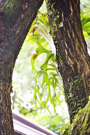 sponger: Kraechgasida are biennial plants like grip on the tree.