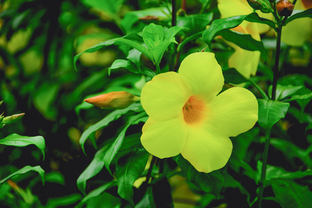 Flowers are blooming and wait for the morning sun. Stock Photo
