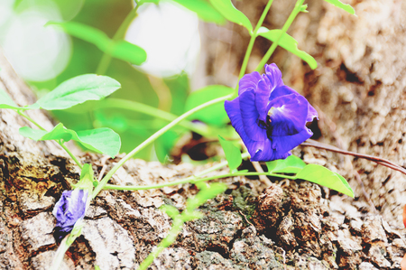 l natural: Pea flowers are purple, but without the smell.