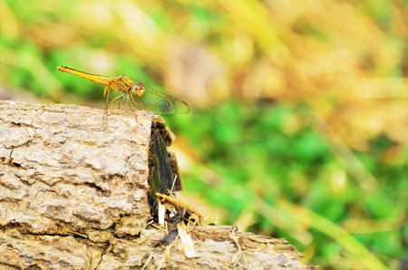 grass close up: Dragonflies are clamped on the end of branches.