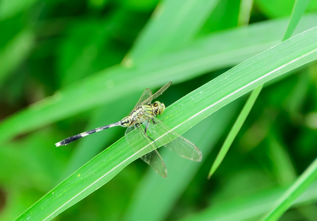clamped: Dragonflies are clamped on blade of grass alone.