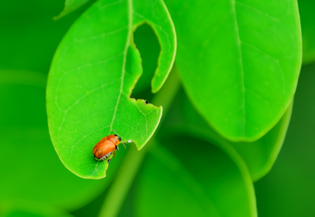 Insects eat leaves, ignoring anything.