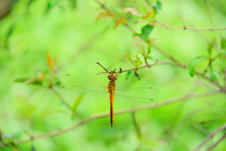 eye close up: Dragonflies are clamped on the end of branches.