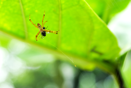 Spider webs are woven to wrap their prey. Stock Photo