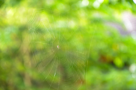 Spiders build webs to catch food as a trap for it.