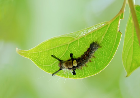 unsightly: The caterpillars are unsightly color for camouflage.