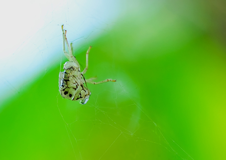 When the wind and insect Stains to adhere to the fiber of spider. Stock Photo