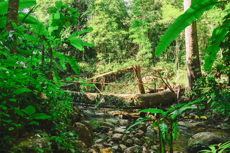 tearing down: Fallen trees can be used by the modification as a bridge over a small river. Stock Photo
