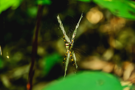 Spider sitting on its web waiting for prey to come up with a trap built into it. Stock Photo