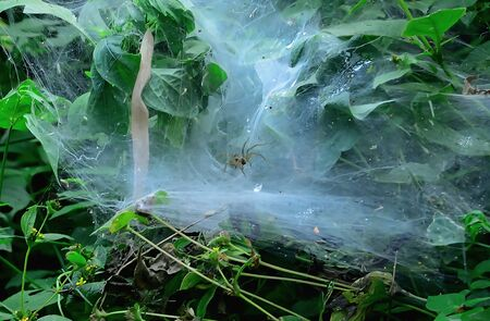 Spiders often hide within the fibers that it created. Stock Photo
