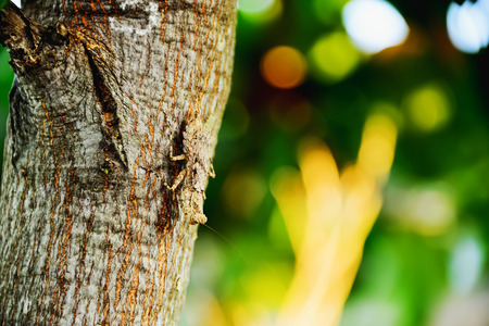 Mantis has a color similar to the color of the trunk of the tree to take advantage of camouflaged to capture prey and hiding enemy.