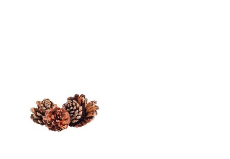 Pine seeds were placed on a white background.