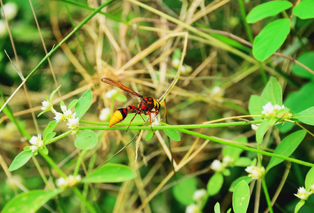 Wasps are perched on a flower in order to find food. Stock Photo