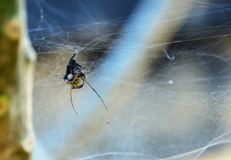 true born: Spiders children had gathered inside its mothers nest that has built it.