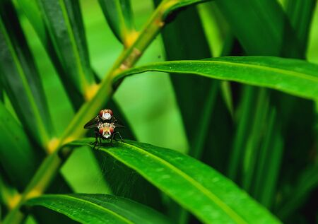 The flies are perched on leaves. Stock Photo
