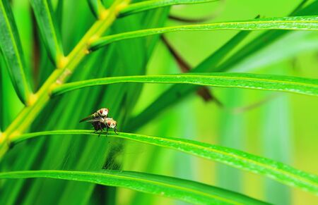 carrion: The flies are perched on leaves. Stock Photo