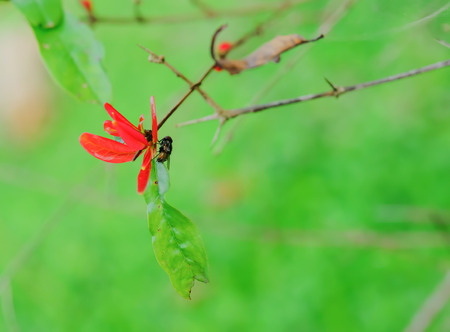 musca: The flies are perched on leaves. Stock Photo