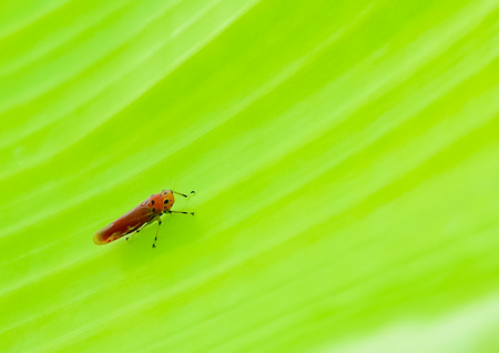 Insect perched on a leaf alone.