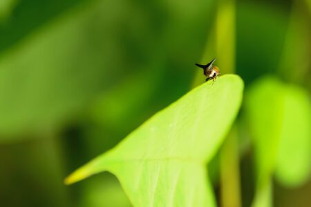 Insects are on the leaves carefully. Stock Photo