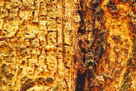 The beetle is attached to the tree, where the color of the bark is colored in color similar to its color.