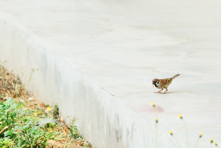 Sparrows are eating insects that they can find.