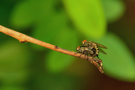 2 flies are perched on the same branch.