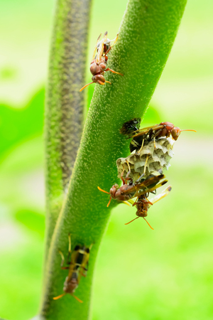 Hornets are keeping watch over their nests without allowing enemy was approaching. Stock Photo