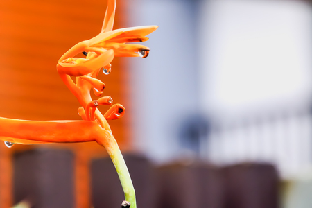 celebration: Bird Paradise has bloomed for a while, and some flowers have been pollinated to become seeds. Stock Photo